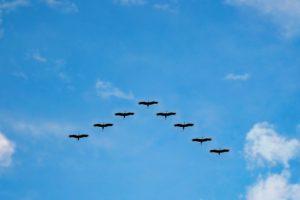 birds-216827_1280